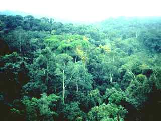 Forêt africaine (Congo)